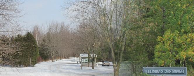 The University of Guelph Arboretum