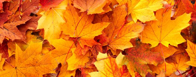 fall-multi-coloured-leaves